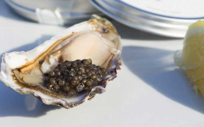 Tasting the precious black pearls of Arcachon bay
